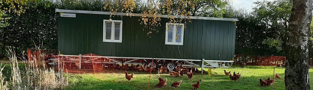Abwechslungsreiche Draußenzeit für unsere Hühner